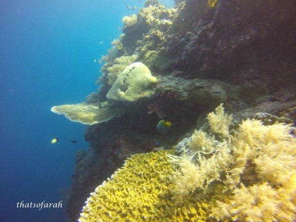Mid Reef Dive Site, Sipadan Island