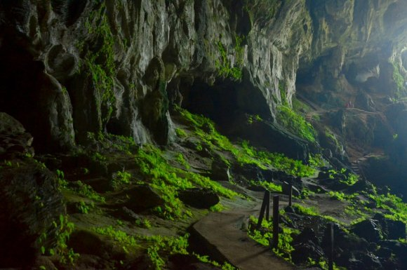 Close up on green vegetation at Fairy Cave