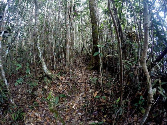 Tropical Jungle Malaysia