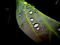 leafdrop