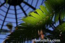 plant-11