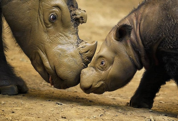 Mother's Day Rhino