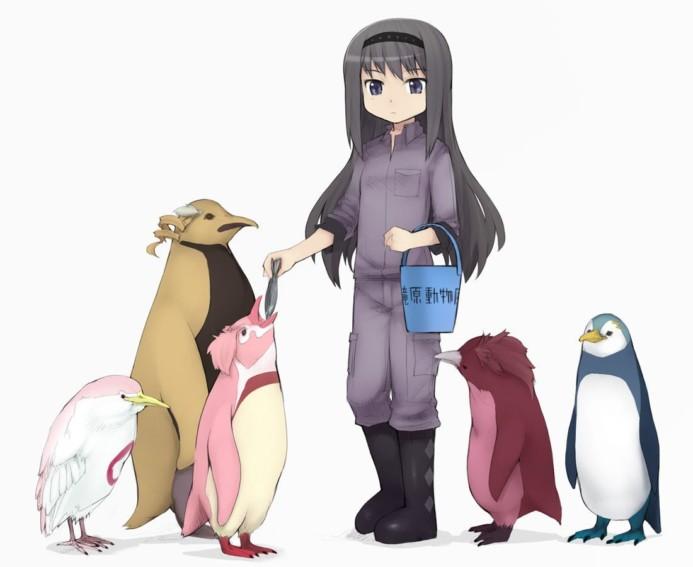Homura feeding the mahou penguins