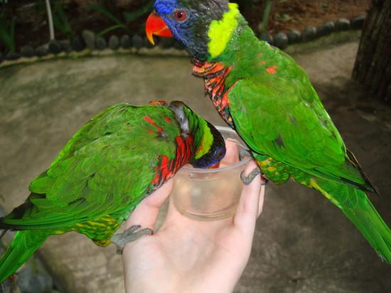 singapore_sentosa_birds