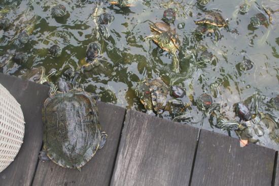 Chinees_garden_Singapore_turtles