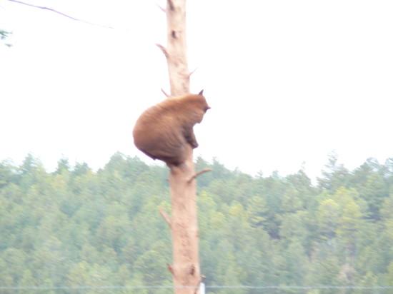 bears_that_wanderlust