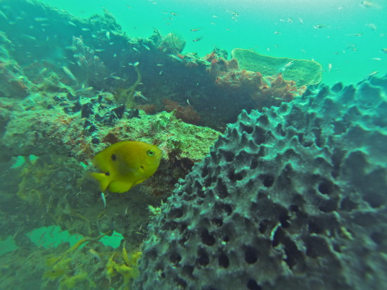 GOPRO_diving_panama