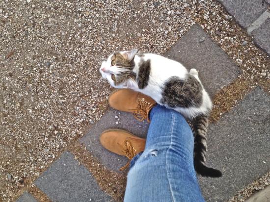poesinboots_italia_valgardena_italy_cat_travelblog