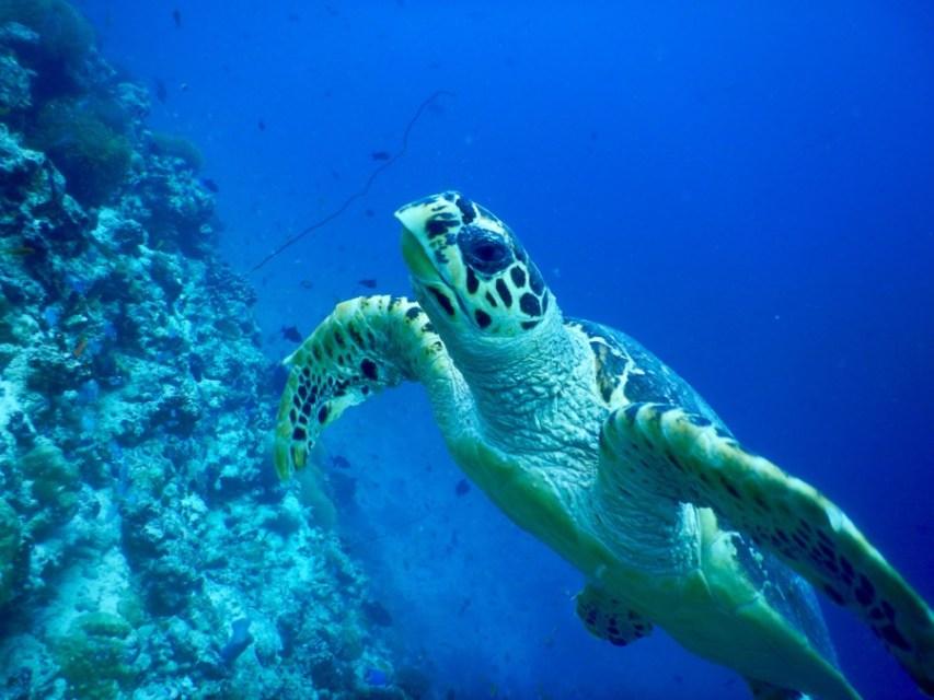 maldives-reethifaru-diving-renate-rigters