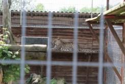 Jaguar wasn't that friendly.