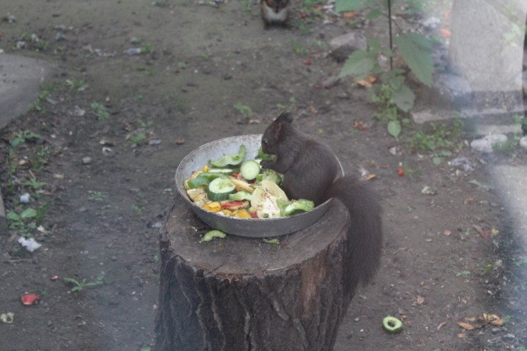 You know, just enjoying some salad.
