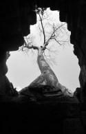 Foto al techo. El árbol crece encima, imperial y majestuoso.
