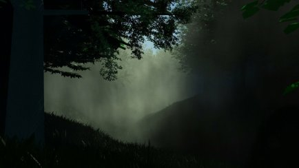 The Forest Clearing