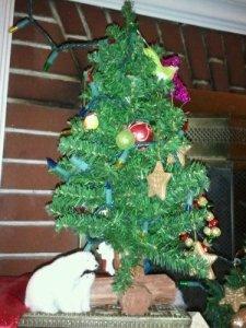 A Bear Tree