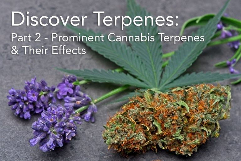 A deeper look at prominent cannabis terpenes.