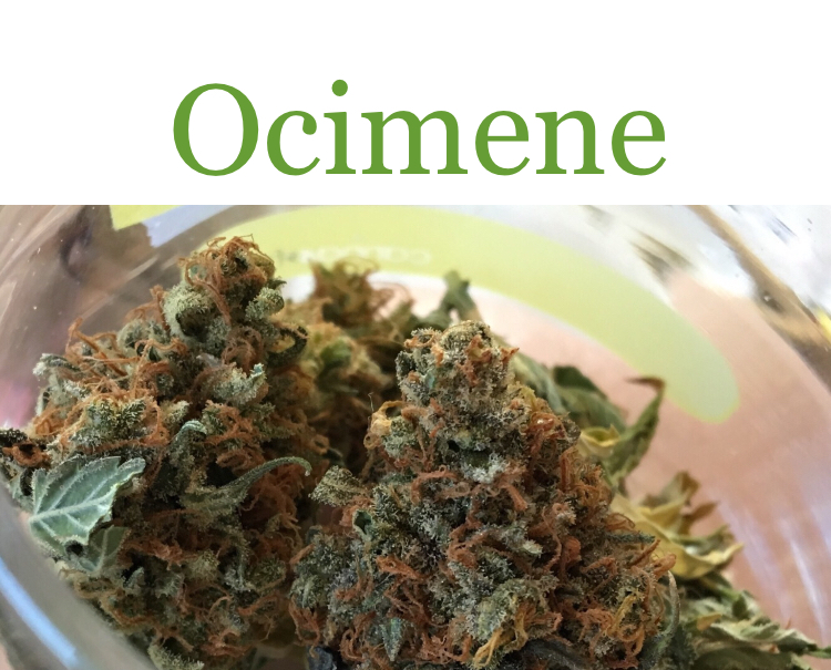 Ocimene is one of the many cannabis terpenes in Carnival.