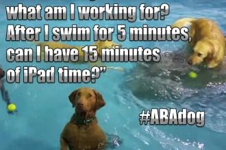 ABA Dog