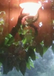 Pam Urfer Hand on Lamp