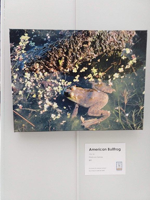 Malcolm Wang American Bullfrog