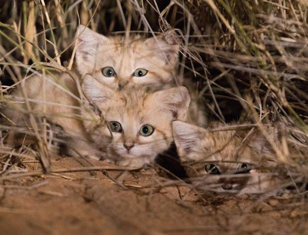 gregory-sand-cats-1-blog