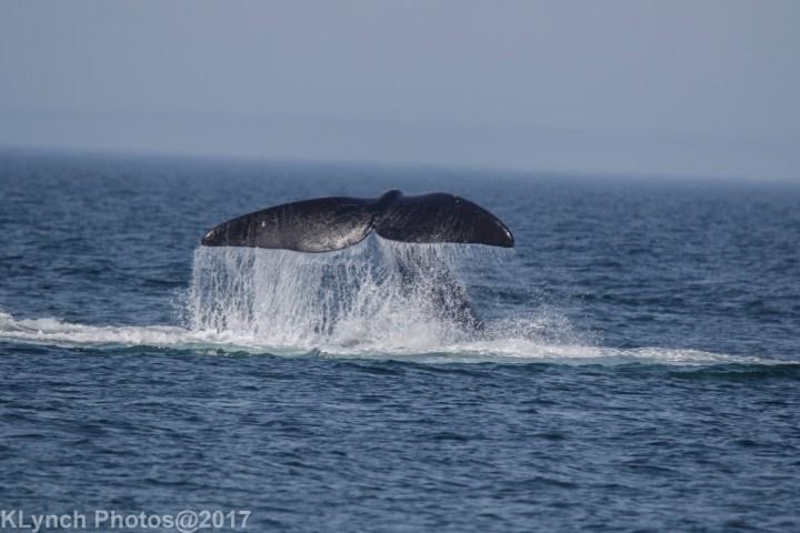 2 whaleA_67