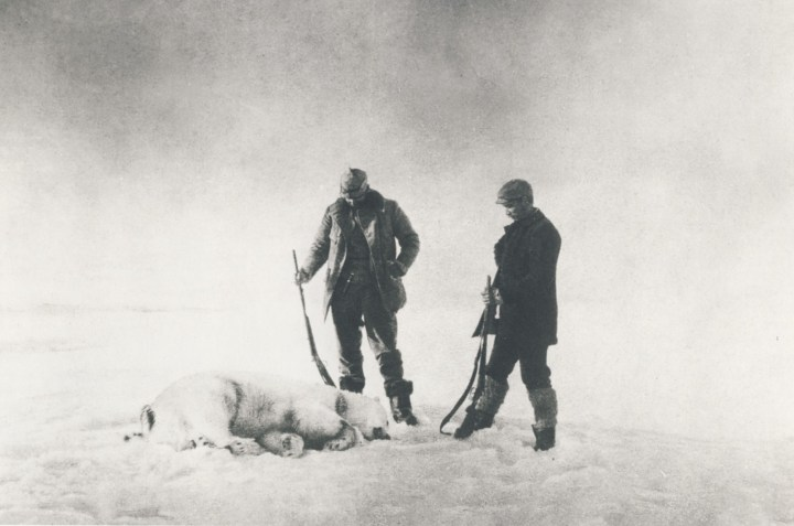Polar.bear_