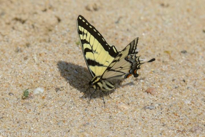 01 butterfly_15