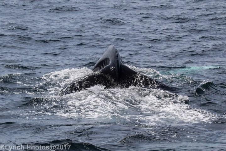 10 whale_151