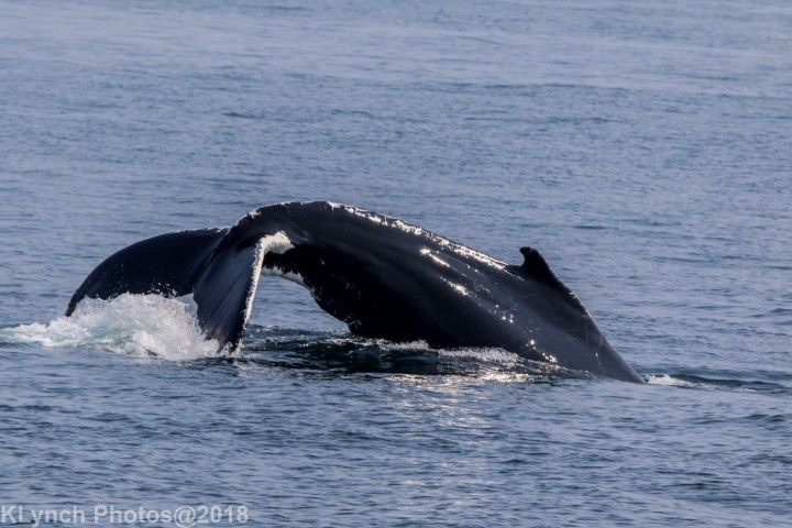 21 Whale_8 (2)