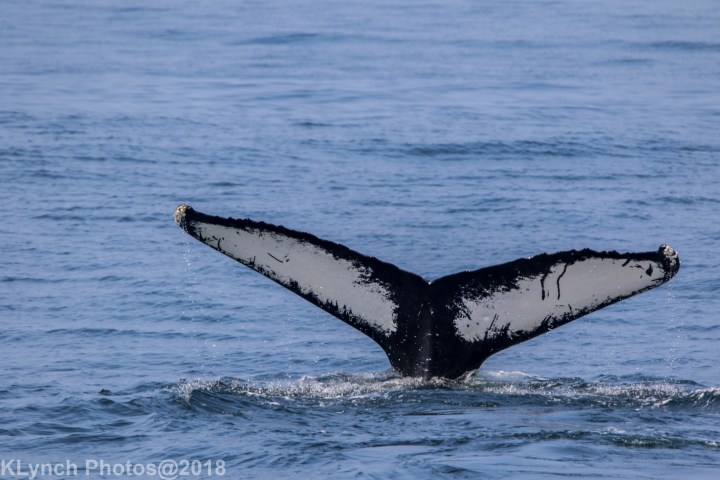27 Whale_113