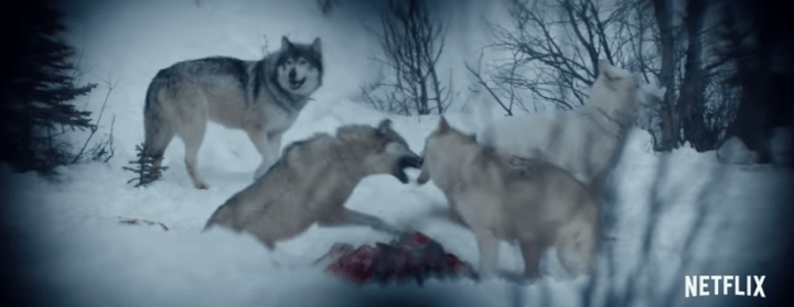 Hold the Dark wolves.png