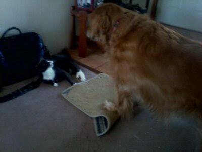 Beavis and Sally2
