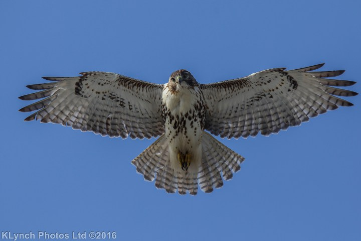 01 Hawk.JPG