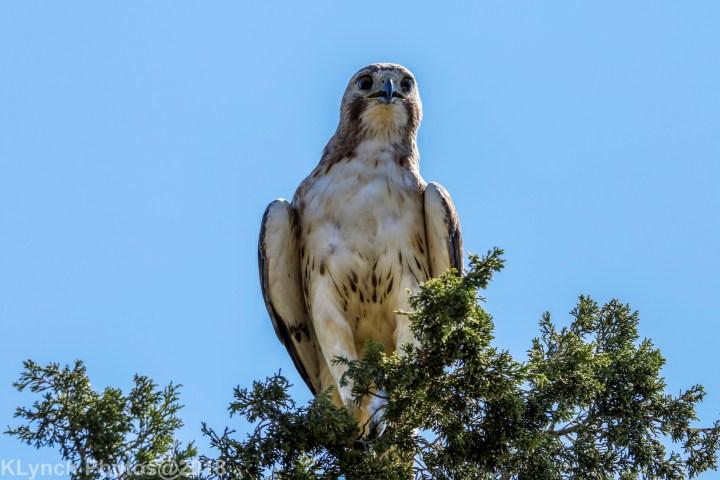 04 hawk