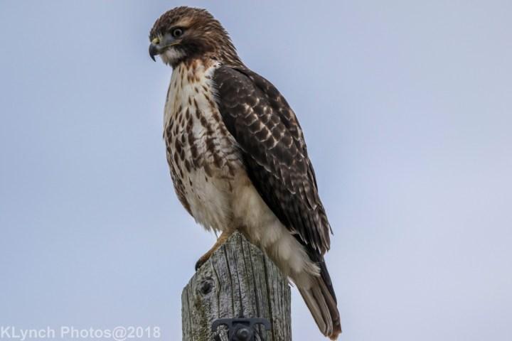 14 Hawk