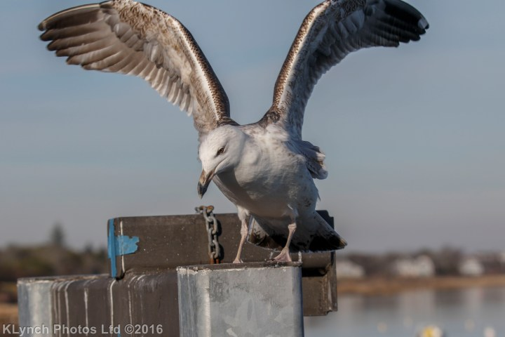 02 Gulls