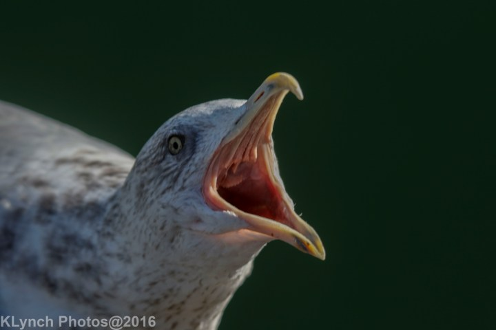 20 Gulls