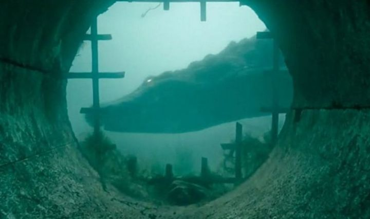 crocodile underwater in front of a storm drain