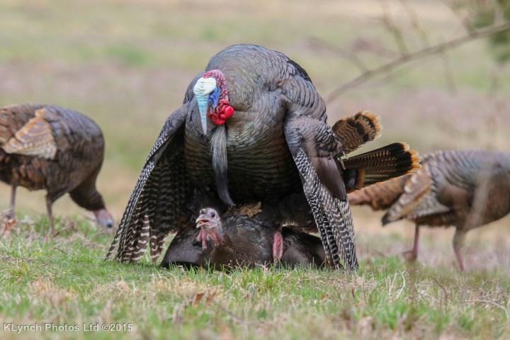 25 Turkey