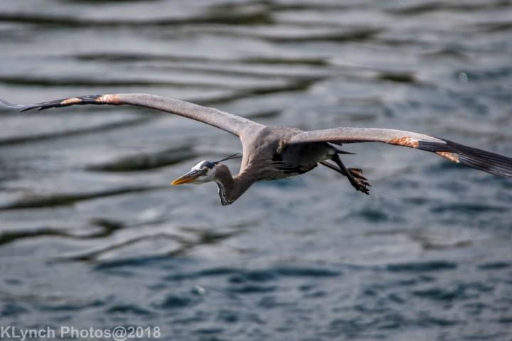 08 heron