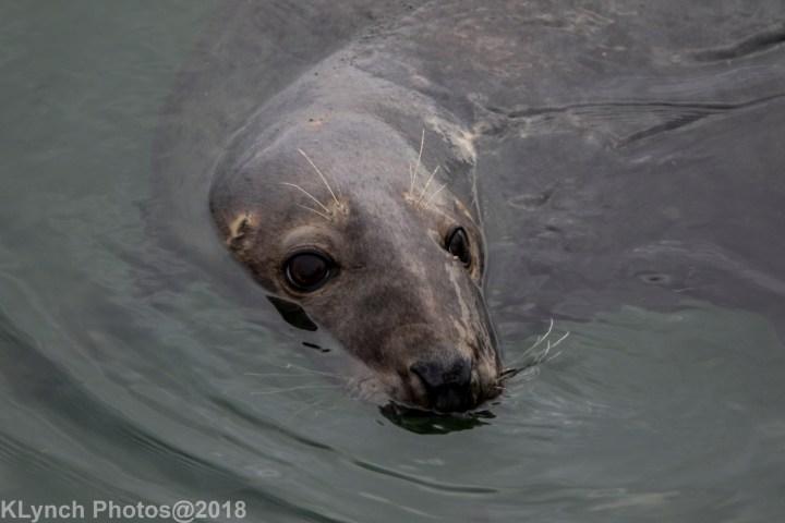 12 seal