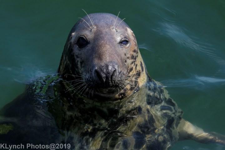 15 seal