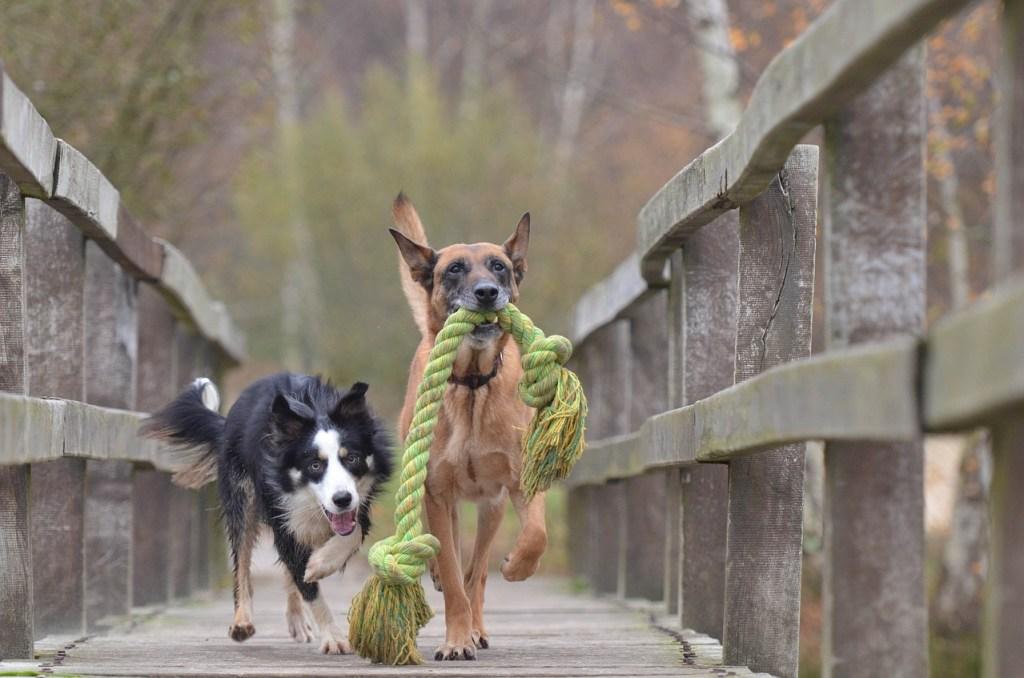 Dog treatment, dog osteopathy, dog rehab, dog rehabilitation