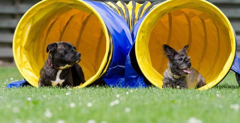 Dog agility, sports dog, dog rehab, dog rehabilitation, dog osteopathy, dog treatment