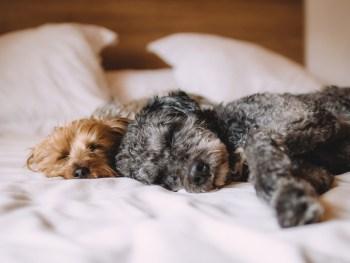 dog bed, dog treatment, dog osteopath, dog rehab, dog rehabilitation