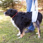 tplo surgery for dogs