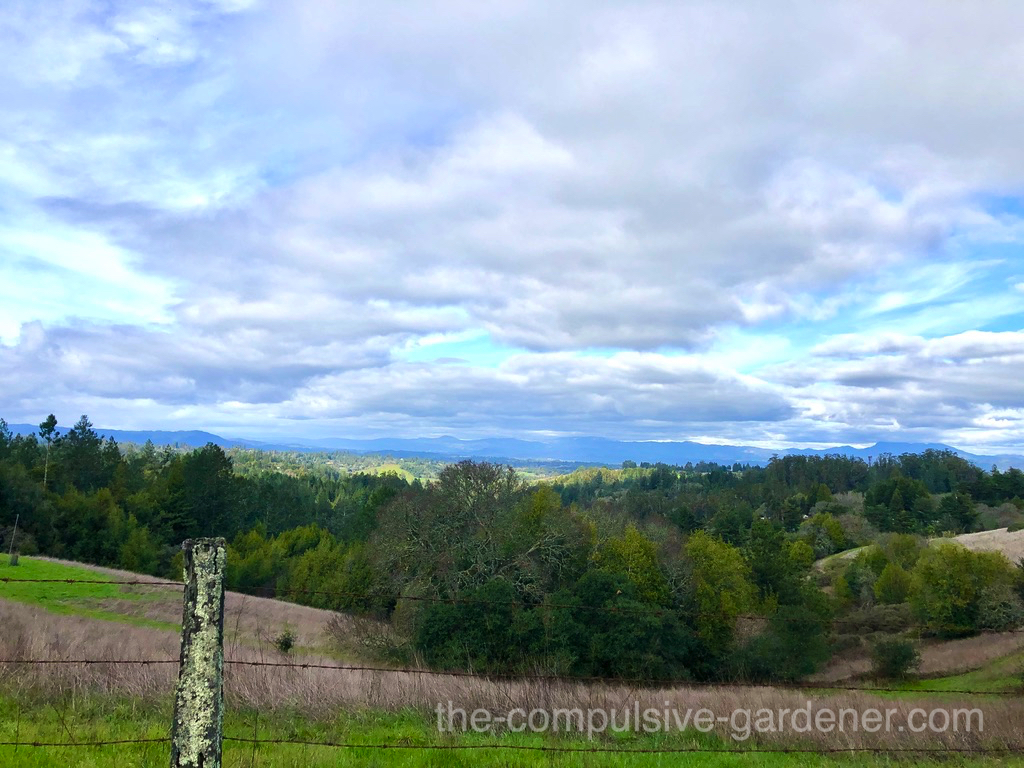 Rolling hills of Sonoma County with backdrop of Mt. St. Helens.