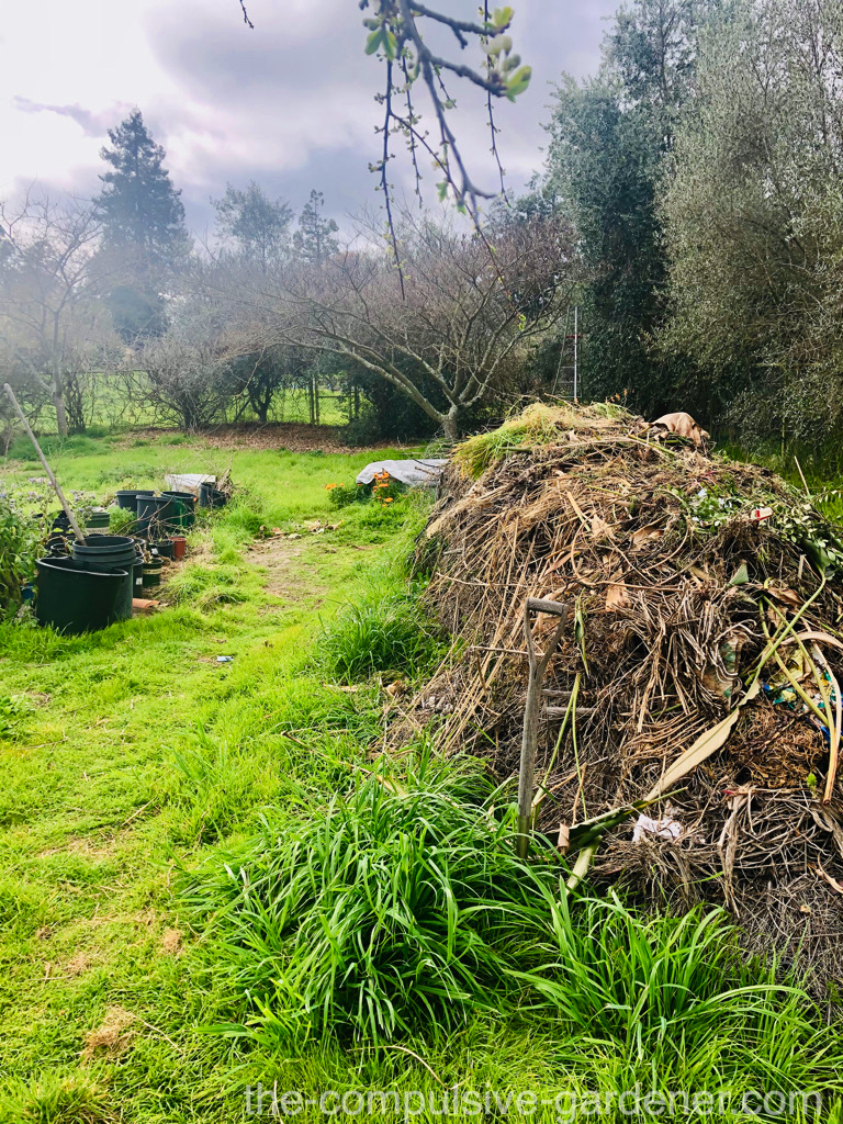 The somewhat homely cold compost pile and plant nursery
