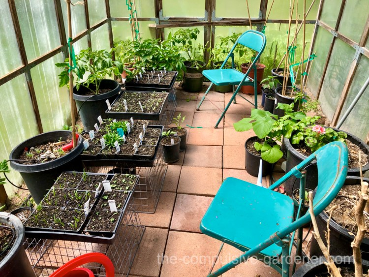 Seedlings in greenhouse awaiting last frost date