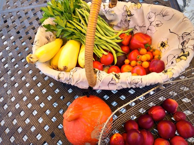 Summer vegetable garden harvest during drought year